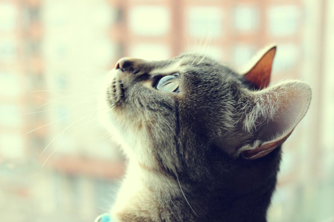 Animals: Curiosity by Abletodoall