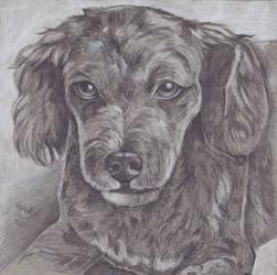 Portrait of Roxy