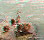 Family Anaglyph 3D