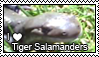 Tiger Salamander Stamp by WindWo1f