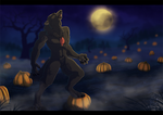 Moonlight in the Pumpkin Patch