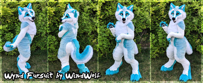 WindWolf Fursuit 2019