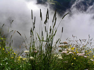 Flowers and mist