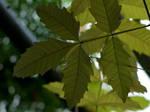 Drops on Leaves by danielwessel