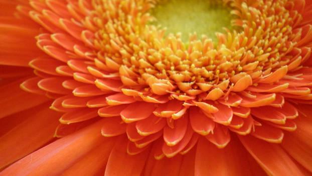 Style me in orange