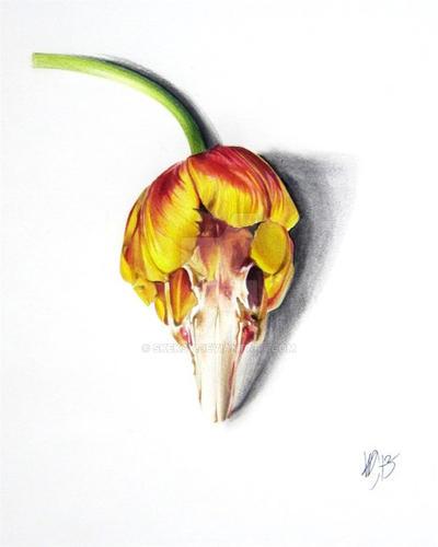 Tulip by Skeksy