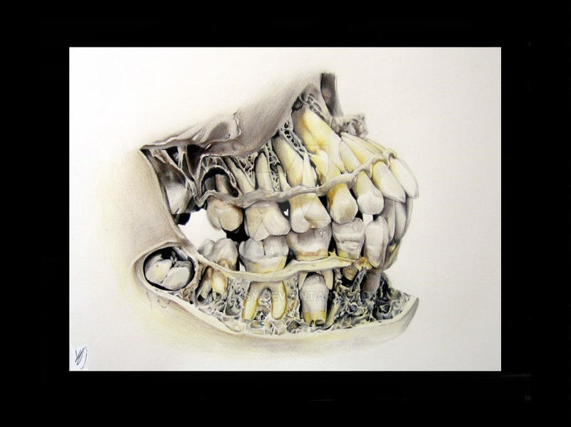 Dentition by Skeksy