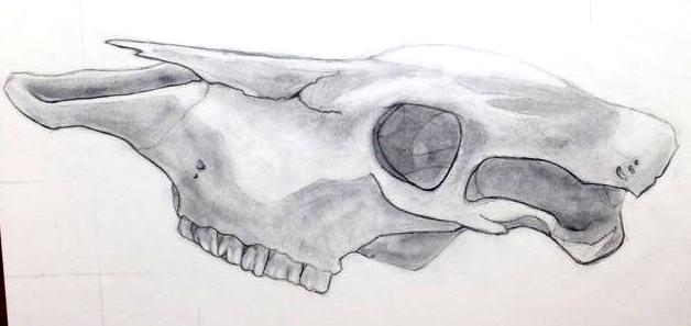 CowSkull by Katakire