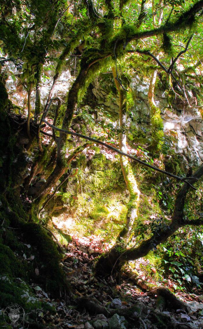 Photographie - Nature by Enamaeris