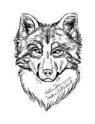 Study: Wolf Portrait 1