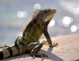 Iguana by Sjem20