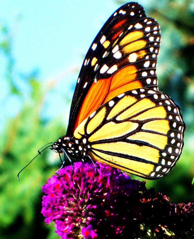 Butterfly Kisses by Sjem20