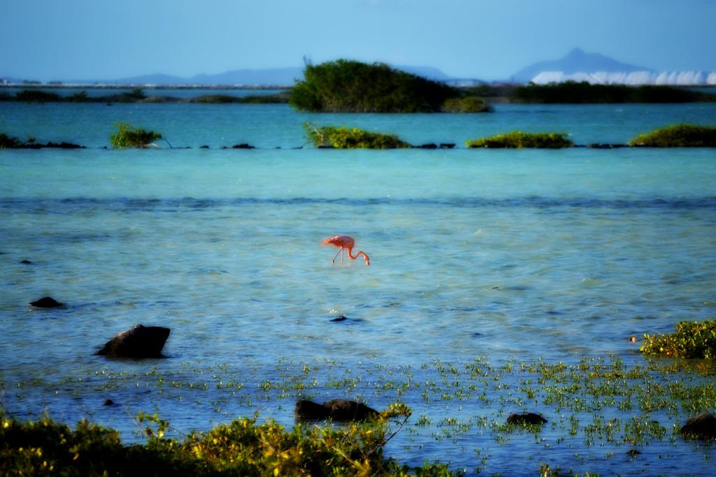 Flamingo by Sjem20