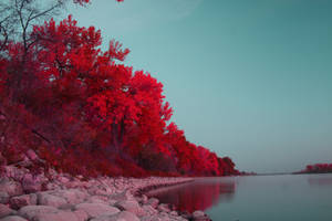 red atumn by MarshallLipp