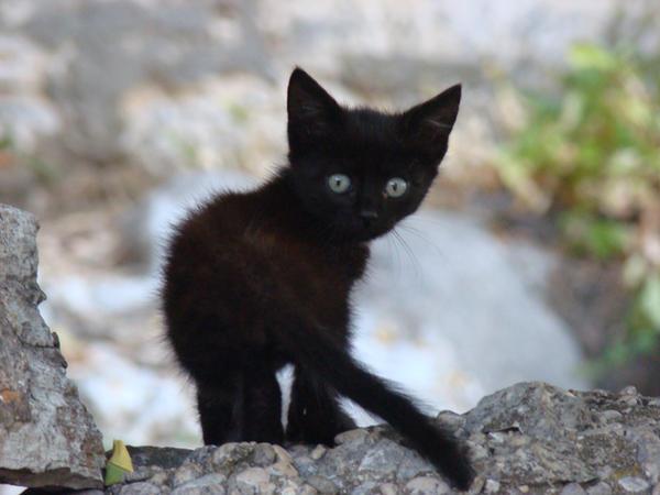 Kitten by t3h-ninja