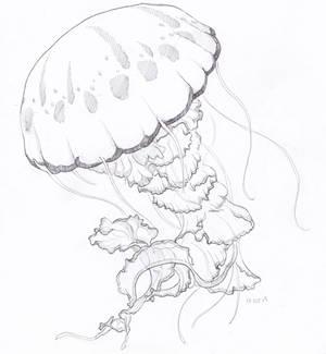 Inktober 2019: 19 Jellyfish
