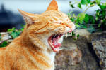 Flip Top-Cat by aka-photography-uk