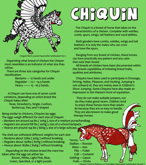 [Updated] Chiquin Breed Sheet - HARPG
