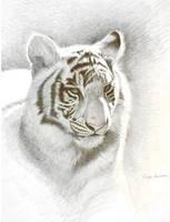 Sun Tiger by wildartguy