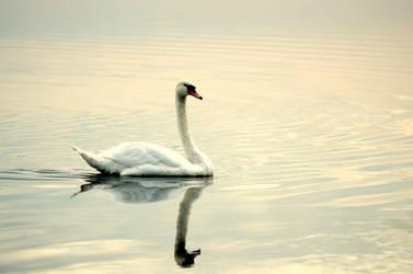 My pond...my kingdom... by pixelmadness