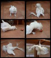 Curious Albino Aaswas by RaoKaran