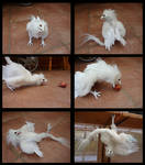 Curious Albino Aaswas