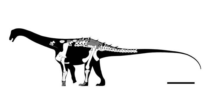 Neuquensaurus australis