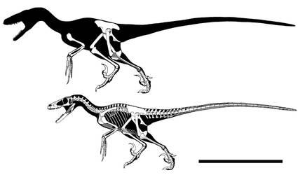 Paul's supreme velociraptor