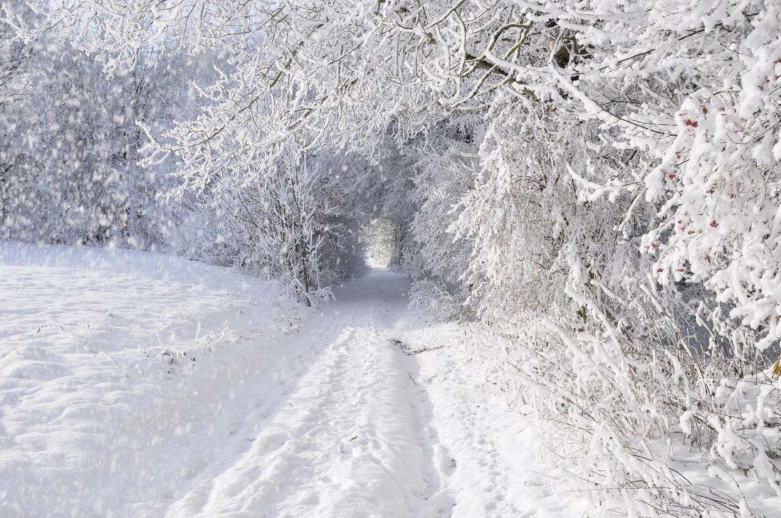 winterwonderland this morning by eagle0eye