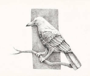 Raven by sorehma