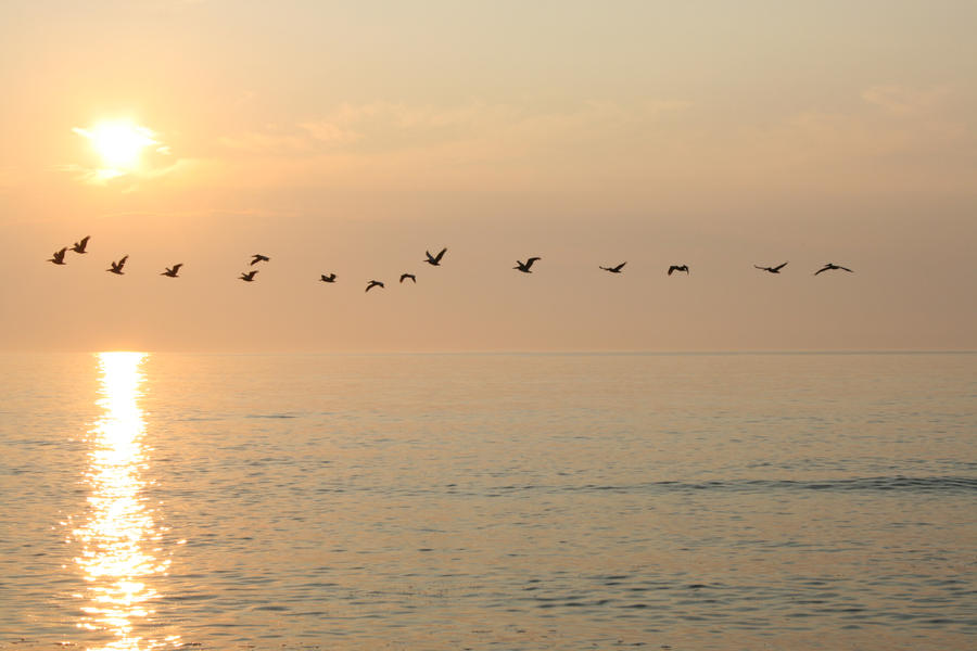 Birds flying with the sun by JRHorvath
