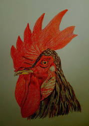 The Rooster by AfroditV
