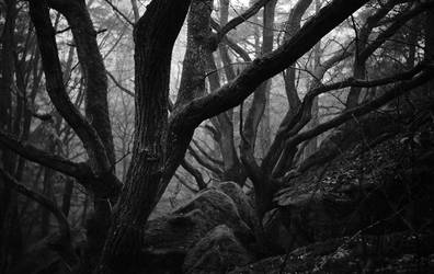 Foggy Forest by BAproductions