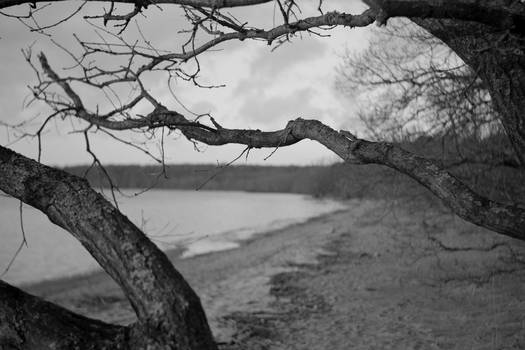 Tree by Vomb Lake