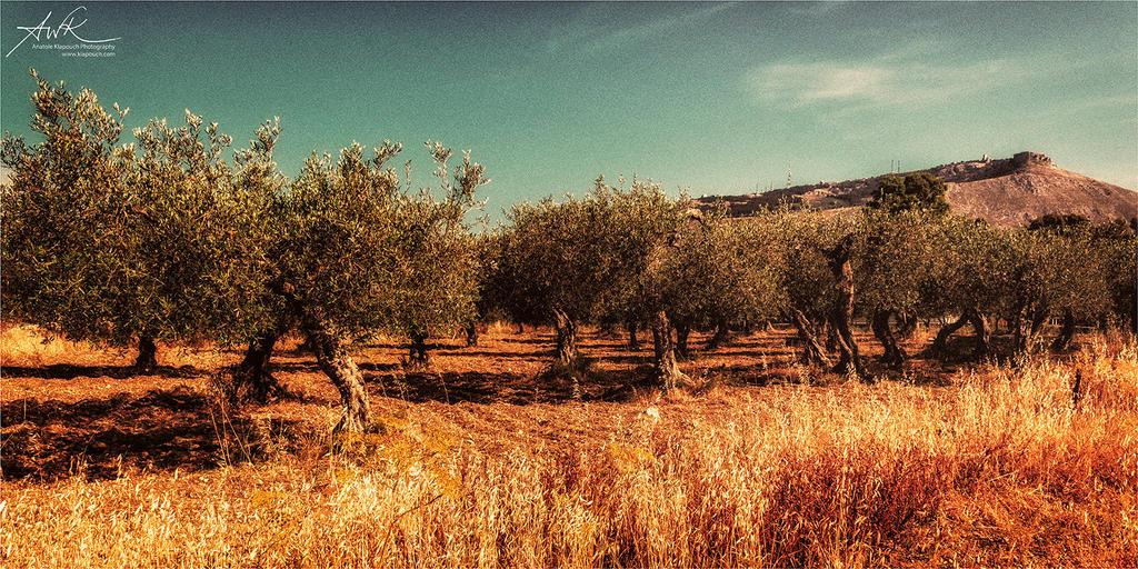 Il regno di olive by klapouch