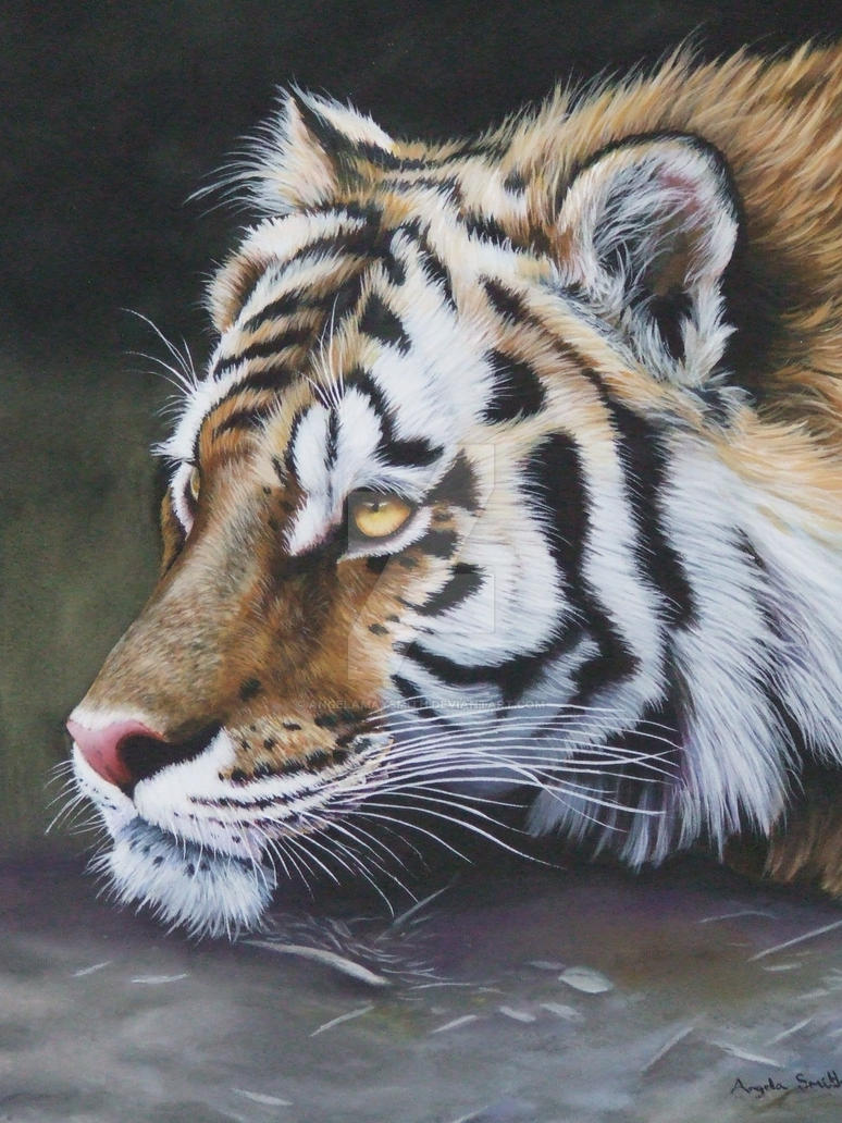 My Tiger, using Pastels by AngelaMaySmith