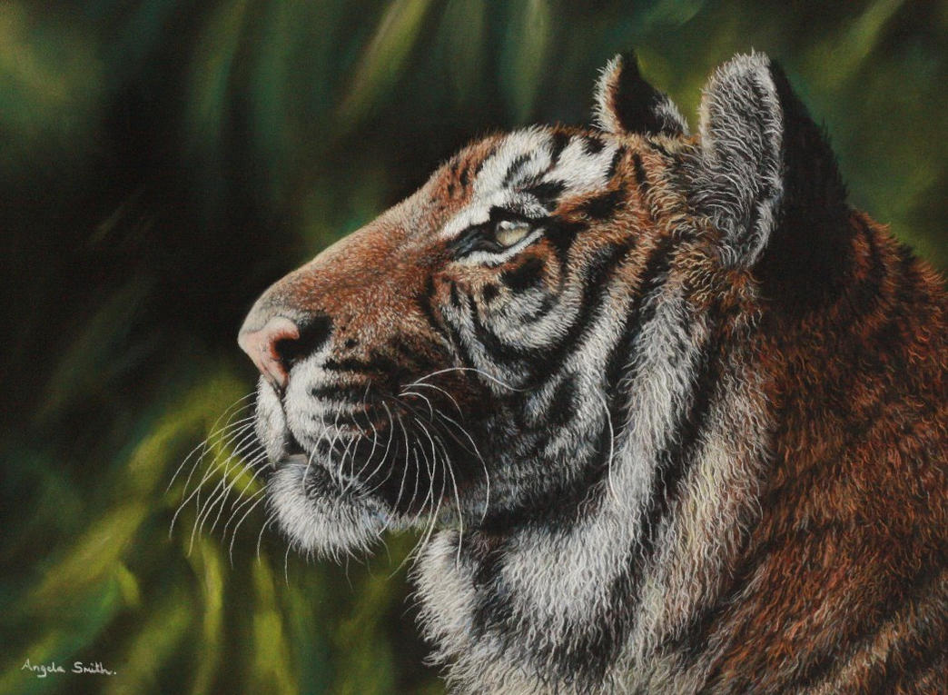 Tiger (Pastel Pencils) by AngelaMaySmith