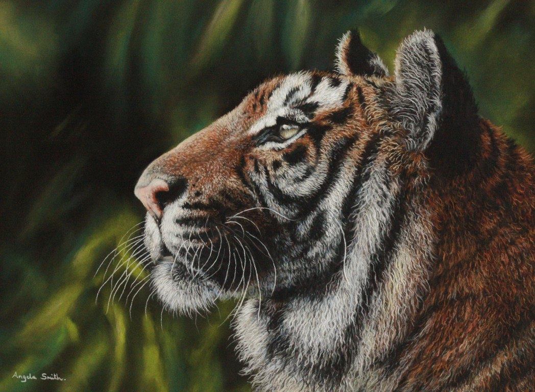 Tiger (Pastel Pencils) by AngelaMaySmith