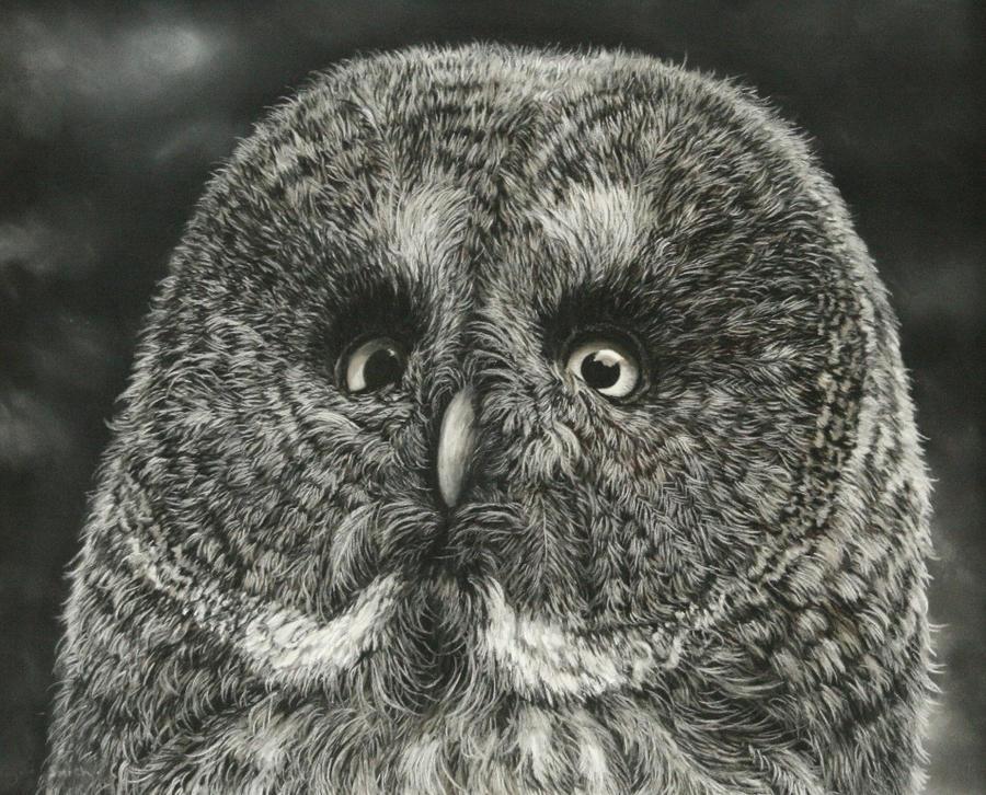 Owl (Pastels) by AngelaMaySmith