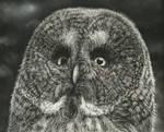 Owl (Pastels)