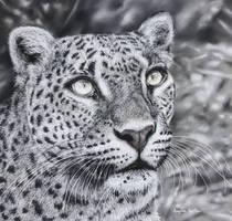 Leopard (Pastel Pencils) by AngelaMaySmith