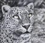 Leopard (Pastel Pencils)