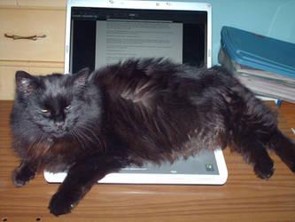Laptop Hog by Lady1Venus