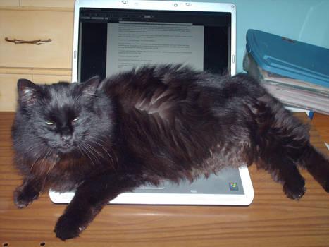 Laptop Hog