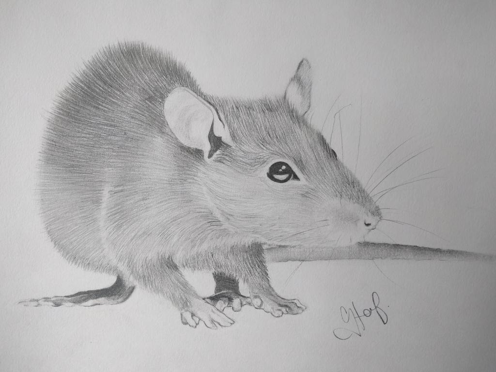More rats! by freezingmoon