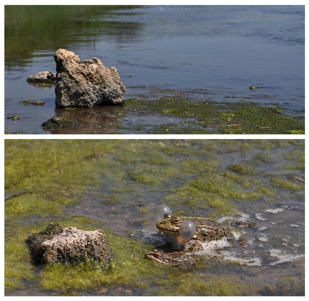 Frogs' spring