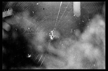 Spiders web by otislifts