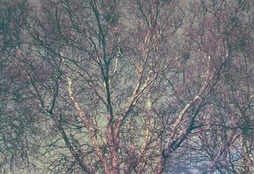Redscale by otislifts