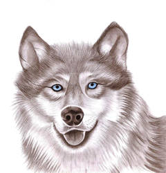 Wolf by FadwaAngela