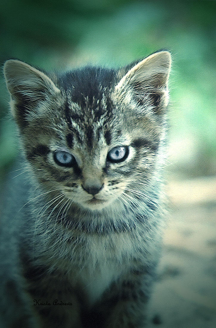 Edit: Kitten by Yi-Shu-Jia